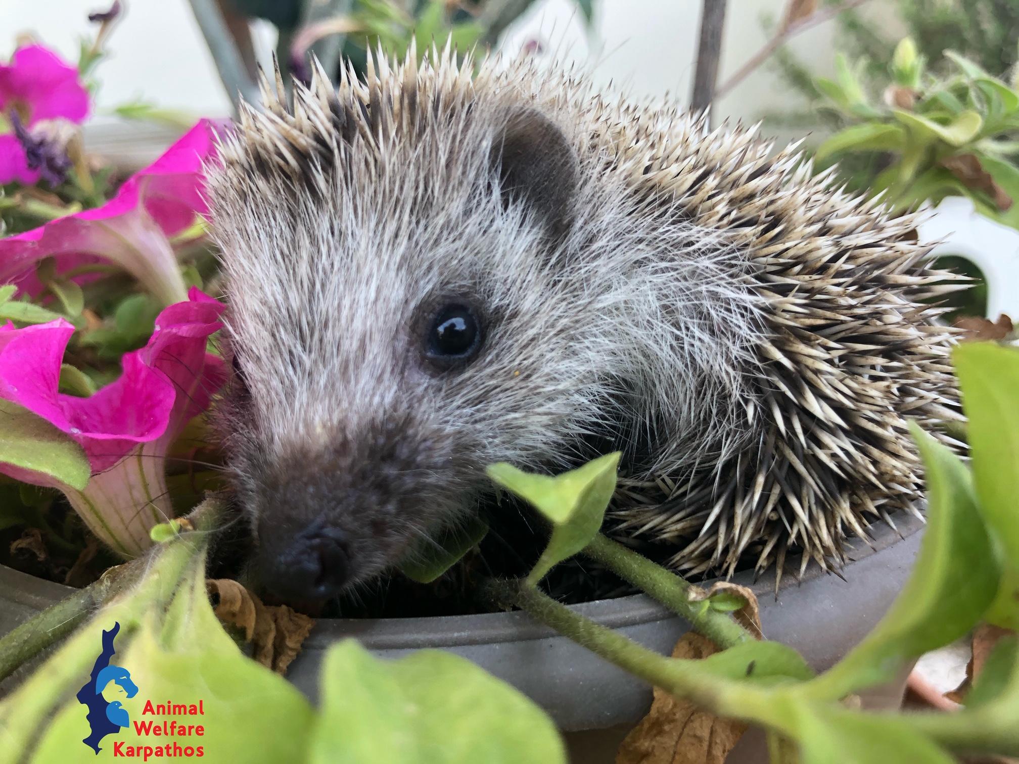 Η οργάνωση προσφέρει βοήθεια σε ολα τα είδη ζώων που έχουν ανάγκη·